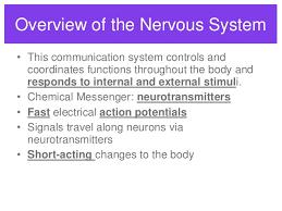 Central Nervous System Vs Peripheral Nervous System Venn Diagram Essay On The Autonomic Nervous System