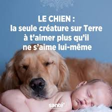 Les 33 citations et proverbes animaux : Images?q=tbn:ANd9GcQTztZCWDFy8PJKBcTCJ5GhMUz7twpzb3wEiEd6_UiA57R-EFuq