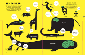 animal sizes chart gallery how nicholas blechman visualises the animal kingdom simon