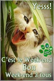 AMOUR De CHATS - BONJOUR BONJOUR LES ZAMIS .. JOLI SAMEDI ..BON WEEK END  GROS BISOUS <3 MH   Facebook
