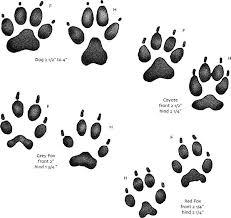 10 Best Photos Of Animal Paw Prints Chart Mn Identify