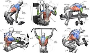 Back Exercises Gym Chart Building Back Muscles 3 Mass Building Back Exercises Gym