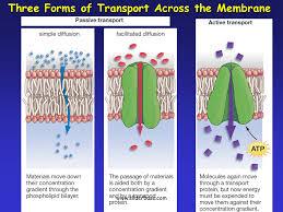 3 Types Of Passive Transport Cytolysis Plasmolysis Sliderbase