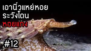 หอยหฤโหด - นักฆ่าแห่งสายน้ำ #12 - YouTube