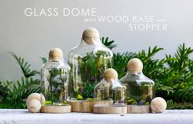 glass dome terrarium with wood base and wood stopper