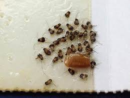 Identifying Insect Eggs Ehrlich Pest Control