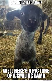 Smiling Lamb | WeKnowMemes via Relatably.com