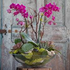 orchid succulent gift