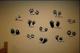 Come check out our giant selection & find yours today. 12 Animal Tracks Set Prints Hunting Wall Decor Decals Animal Bedroom Boys Hunting Room Hunting Room