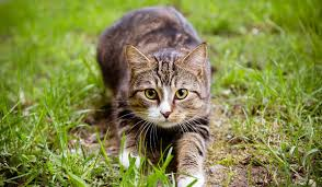 in the uk a case known as the m25 cat or croydon cat is under investigation pic shutterstock