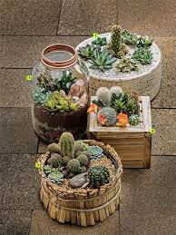 Small Picture Best 25 Indoor mini garden ideas on Pinterest Terrarium Making