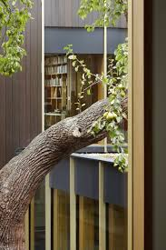 Tree House Architecture Edgley Design Builds Family Home Around 100 Year Old Pear Tree In