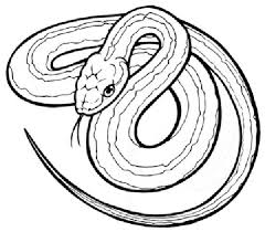 Small Picture Snake Coloring Pages 6 Coloring Kids