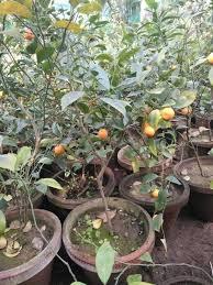 Small Orange Fruit On Tree
