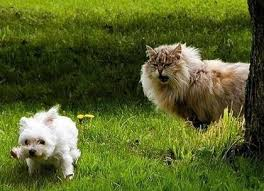 domestic animals images cats n dogs and background domestic animals images cats n dogs and background photos