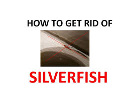 Get Rid Of Silverfish Diy Natural Home Remedies Bugwiz