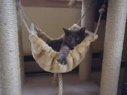 37 best Cool Cat Scratching Posts images on Pinterest