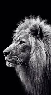 Pin Uživatele Radek Svoboda Na Nástěnce Lvi Leones Animales Fotos