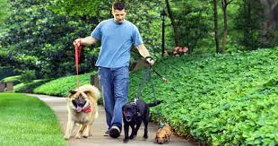 Image result for dog walking