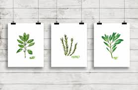 watercolor herbs print set no 1 botanical prints giclee herb with herb wall art