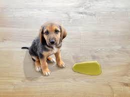 Willst du, dass dein hund endlich in bester form ist und ein gesundes leben führt ? Tiere In Der Wohnung Wer Muss Fur Bepinkelten Boden Aufkommen