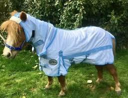Shetland Pony Rug Size Chart