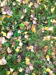 grass field from above. Autumn Leaves On A Green Grass Field, View From Above Stock Photo - 87897369 Field L