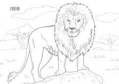 Small Picture Wild Animal Cell Coloring PageAnimalPrintable Coloring Pages