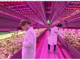 Wachstumsfördernde LED Beleuchtung Von Pflanzen