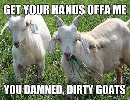 Goat Quotes Custom Funny Goat Pictures With Quotes Siewallsco