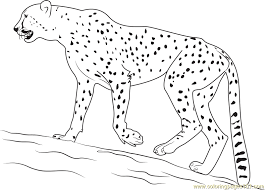 Small Picture Walking Cheetah Coloring Page Free Cheetah Coloring Pages