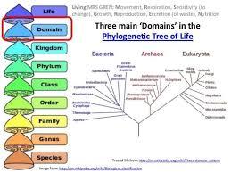Ib Biology 5 3 Slides Classification Taxonomy