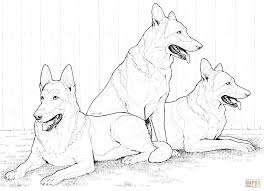 Small Picture German Shepherd Dogs coloring page Free Printable Coloring Pages