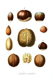 Nut Identification Chart Nut Recipes The Perennial Post