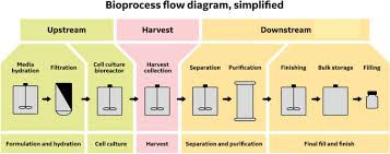 Bioprocess Flow Chart Bioprocessing An Overview Sciencedirect Topics