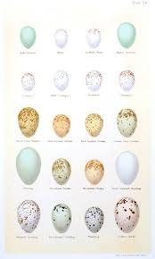 British Bird Egg Identification Pusat Hobi