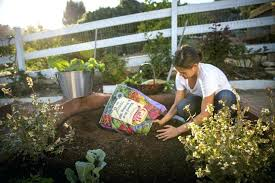 raised garden bed soil mix raised bed soil mixes large size of organic garden bed vegetable raised garden bed soil mix