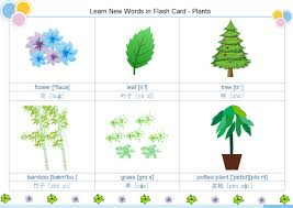Plants Flash Card | Free Plants Flash Card Templates