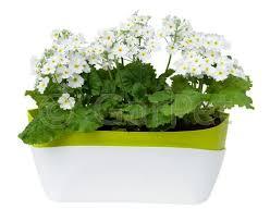 Blumenkasten Kräutertopf Kräuterkasten Küche Fensterbank Balkon Mit
