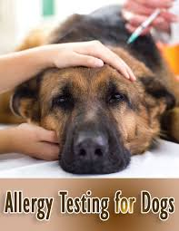 Quiet Corner:Allergy Testing for Dogs - Quiet Corner