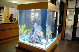 this large cubical aquarium serves partially as a room divider but can also be observed from all sides aquarium office