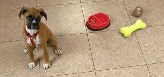 best flooring for dogs services dog urine vinyl how to choose the pets