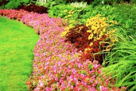 lush landscaping ideas. lush denver custom landscape design for less landscaping ideas