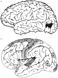 The ferrier lecture 1995 behind the seen the functional specialization of the brain in space and time