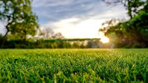 Grass Drawing Two Academy Trusts Have Been Accused Of Using Behaviour Tactic Called flattening The Grass Texturescom How Much Damage Will flattening The Grass Do To The Trad Cause