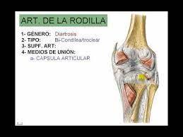 Articulacion De La Rodilla Youtube
