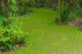 Moss Lawn Care \u2013 Growing Moss Lawns Instead Of Grass