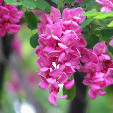 Image result for biochurch.com