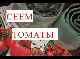 <b>Томаты</b>. Посев <b>Томатов</b>. Рассада в Улитке - Урожай Гарантирован!