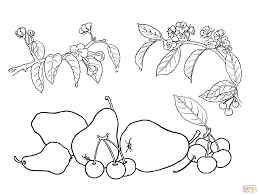 Small Picture Pear Tree Coloring Page And Cute With Leaves And Pears ijigenme